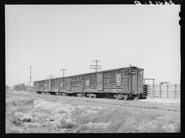 Empty cattle cars on siding at Willcox, Arizona. Ranching is extensively developed around Willcox