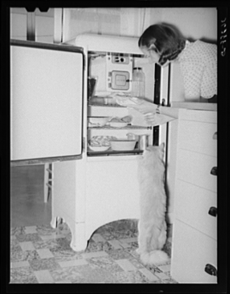 Even the cats know the refrigerators contain plenty of food at the Casa Grande Farms. Pinal County, Arizona