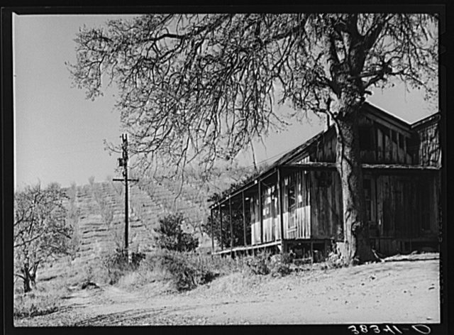 Farm house with orchards in the background near Auburn, California. Farmers haven't had much money in this section to repair houses in the last ten years. They have raised a hard variety of pears which are no longer bought by the eastern markets since new refrigeration methods made the softer varieties shipable. Placer County