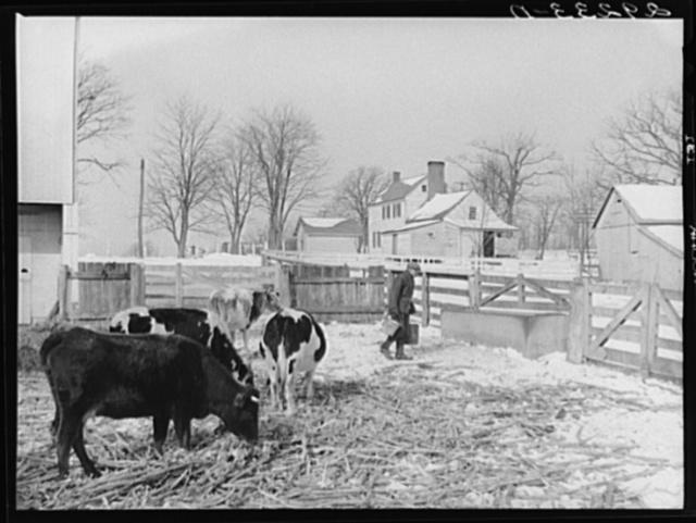 Farm. Montgomery County, Maryland