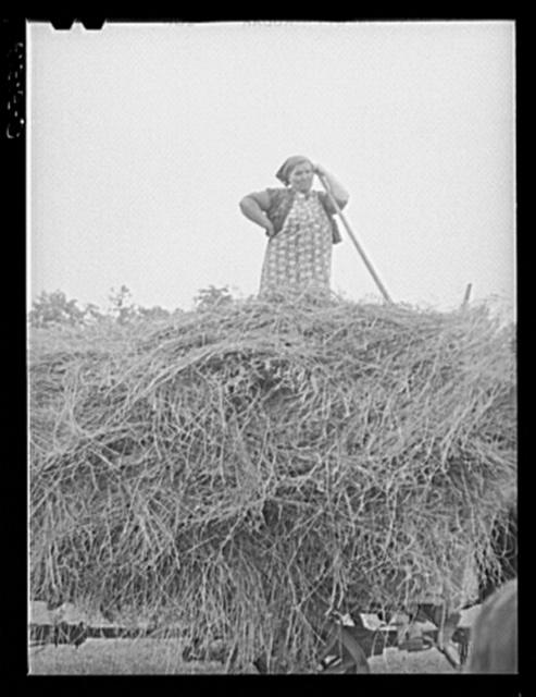 Farm wife helping to load hay. Door County, Wisconsin