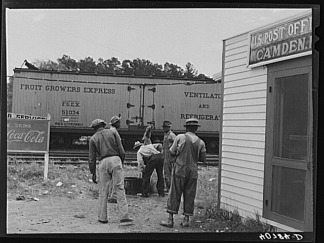 Florida migrants during lunch hour at potato grading station. Camden, North Carolina