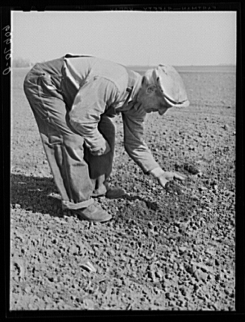 Fred Coulter, Iowa corn farmer, examining soil on his place. Grundy County, Iowa