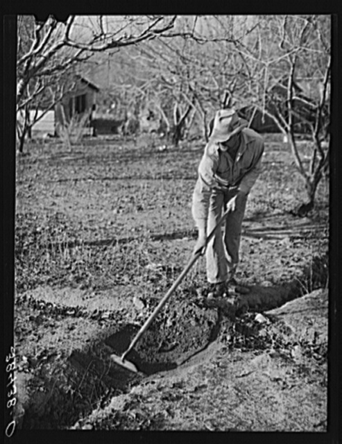 Fruit farmer clearing out irrigation ditch. Placer County, California.  Irrigated farming is a new thing to this man who migrated from Oklahoma and has now bought a farm through the Federal Land Bank. Fruit farmers in this section are fast losing their farms due to long indebtedness to Federal Land Bank and many farms are being bought by Okies and Japanese who, because of lower living standards and willingness to grow gardens, cows and pigs instead of specializing exclusively in fruit, have a chance to make a go of the farms.