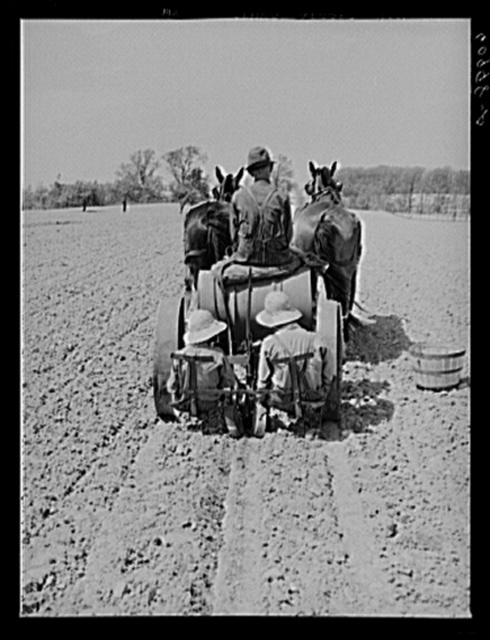 FSA (Farm Security Administration) rehabilitation borrower driving tomato planter. The two little girls sitting in back drop the plants into the ground and cover them up. Crawford County, Illinois