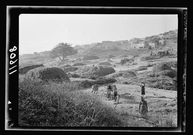 Galilee trip. Saffourieh (near Nazareth). Saforis (Sepphoris). General view of the Saffourie[h] threshing floors below the village