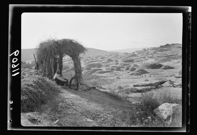 Galilee trip. Saffourieh (near Nazareth). Saforis (Sepphoris). General view of the Saffourie[h] threshing floors below the village with watchman's booth