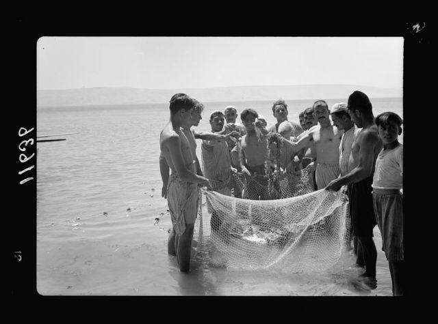 Galilee trip. Tiberias fisheries (Arab). Close up of the haul