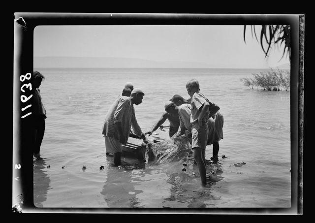 Galilee trip. Tiberias fisheries (Arab). Placing fish in storage float