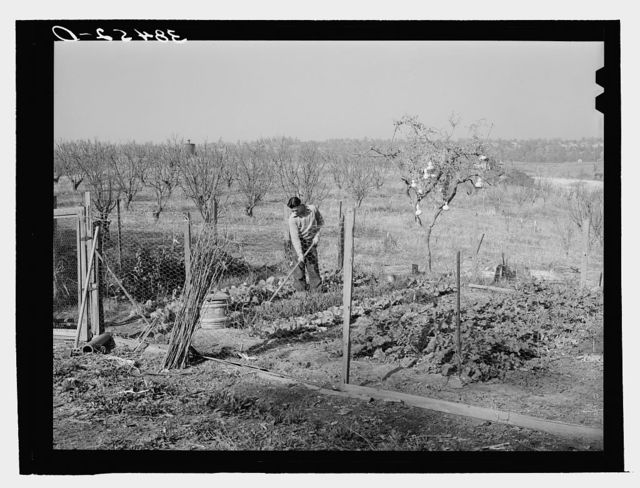 Garden and orchard of Chinese farmer. Placer County, California