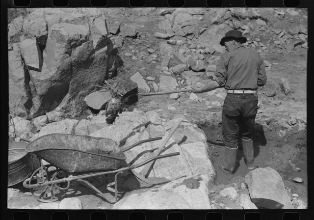 """Gold prospector shoveling dirt and rocks into wheel barrow. He will run this through the dry washer called a """"papago"""" of old Indian design.  Pinos Altos, New Mexico"""