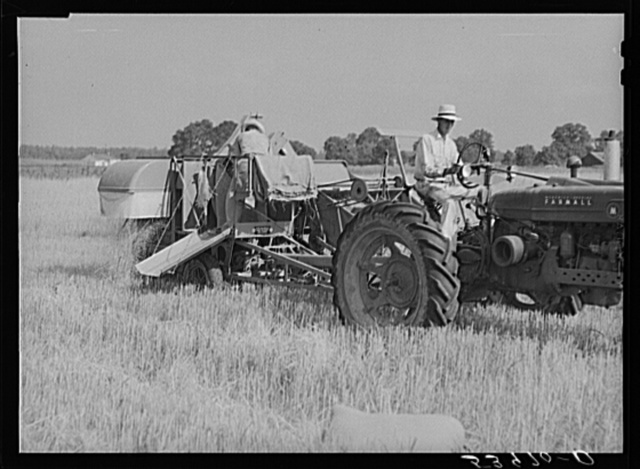 Golus Skipper and A.L. Ross threshing Willy D. Anglin's oats with co-op association binder. Transylvania Project, Louisiana