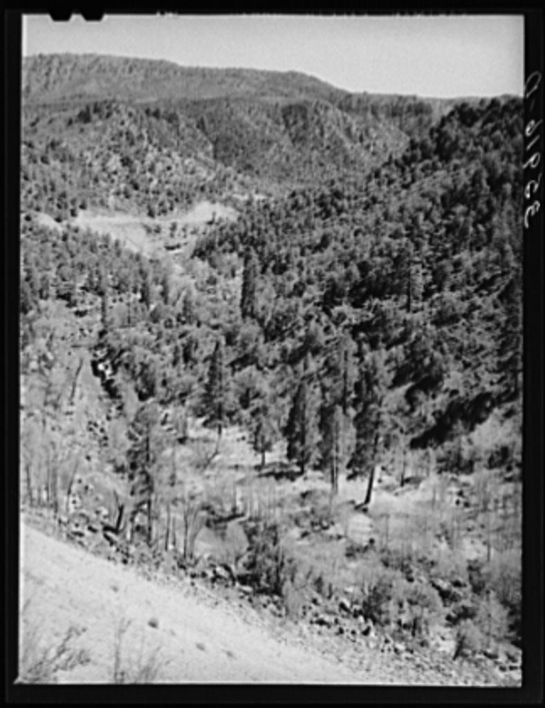 Gorge of Carrizo Creek. Navajo County, Arizona
