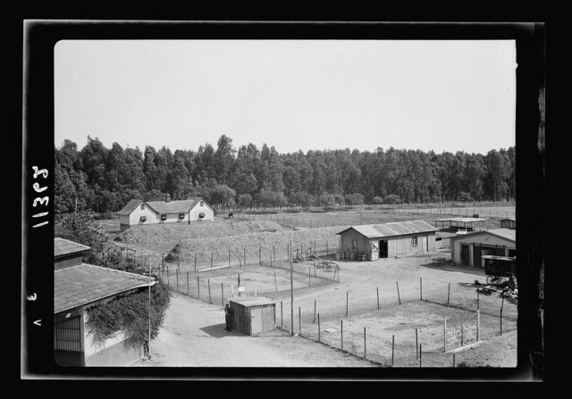 Government Stud Farm, Acre. The stables and barnyard