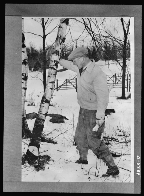 Governor Leverett Saltonstall of Massachusetts officially launches Paul Bunyan woodchopping contest in Massachusetts on Washington's birthday under the sponsorship of Granges and Farm Bureaus in the New England states, New York and Pennsylvania, in cooperation with the War Production Board (WPB) Northeast Lumber Production Campaign. Governor Saltonstall is here shown pulling over a tree he has chopped on his Dover, Massachusetts farm. Farm woodchopping champions of eight Northeast states will be honored in Washington on basis of their individual log production, February 22 to April 1, to provide lumber for war needs