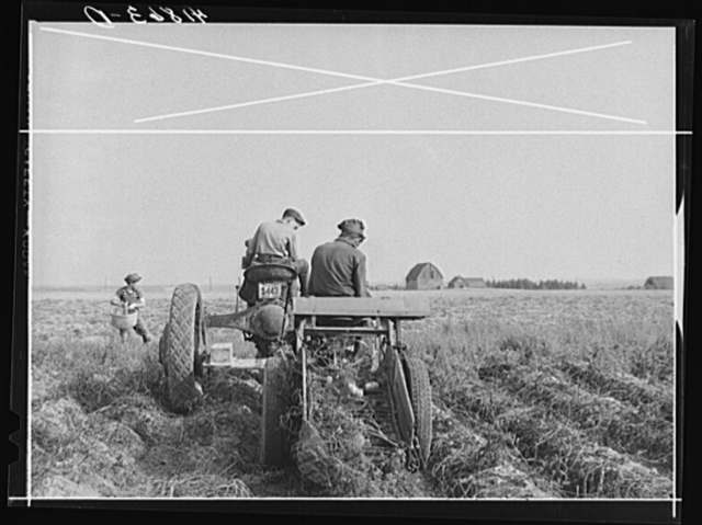 Harvesting potatoes with a single-row tractor-drawn digger on a farm near Caribou, Maine