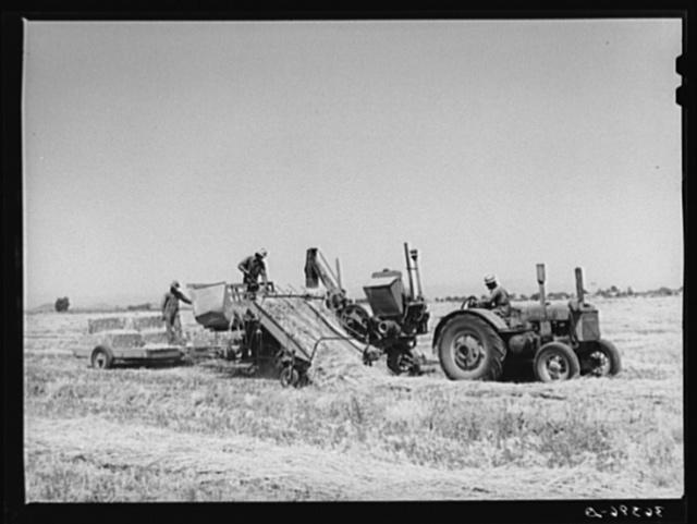 Hay picker-up and chopper at the Casa Grande Valley Farms. Pinal County, Arizona