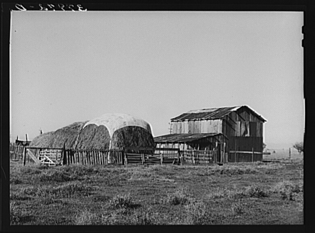 Haystack and barn of Jo Webster, farmer in El Camino district, Tehema County, California. He owns twenty-five acres but owes money on irrigation bonds. He rents an additional fifteen acres. He has about twenty dairy cows, poultry and raises his own alfalfa
