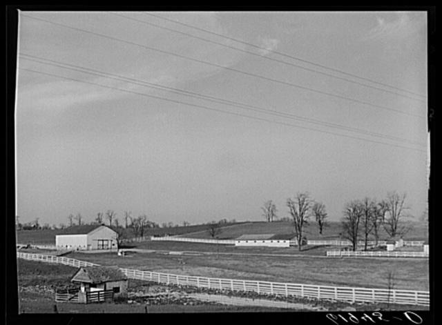 Horse farm in Bluegrass country. Fayette County, Kentucky