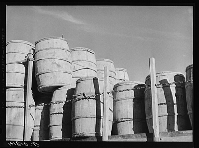 In Aroostock, the farmer speaks of his potatoes in terms of barrels rather than bushels or sacks. Truckload of barrels near Washburn, Maine