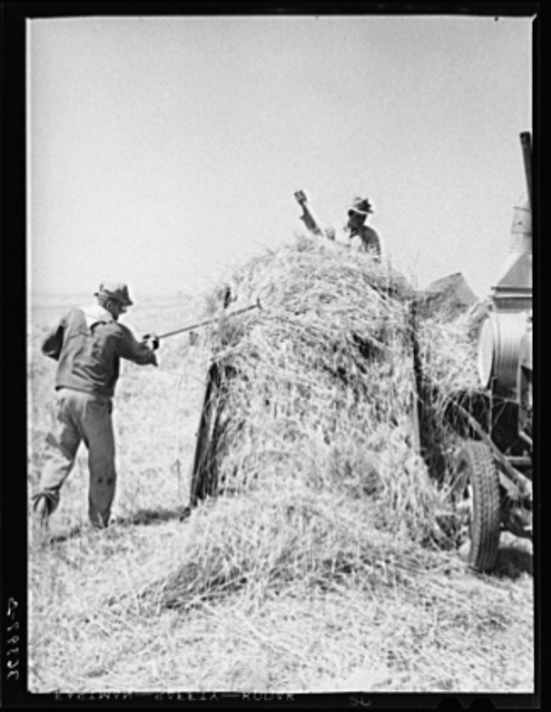 In the hay field at Casa Grande Valley Farms. Pinal County, Arizona