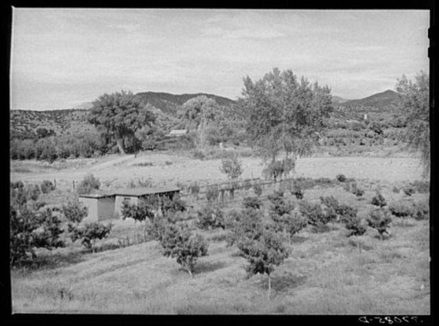 Irrigated Spanish-American farm. Amalia, New Mexico