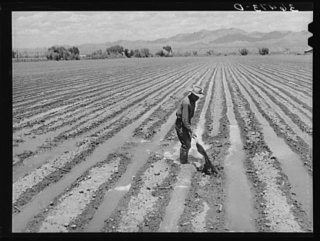 Irrigation at Solomonsville, Arizona