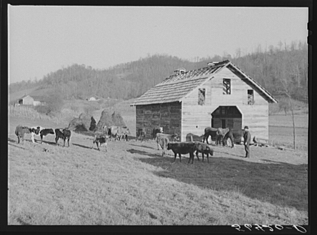 Josh Calahan's new barn and some of his livestock. Southern Appalachian Project near Barbourville, Knox County, Kentucky
