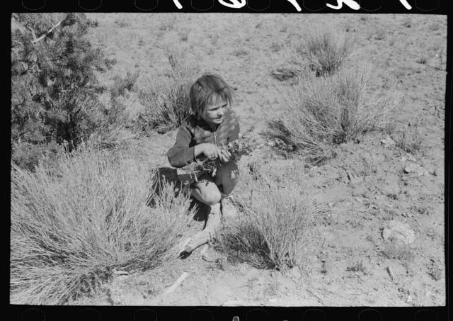 Josie Caudill gathering wildflowers. Pie Town, New Mexico