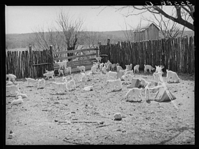 Kids in corner of stockade on ranch in Kimble County, Texas