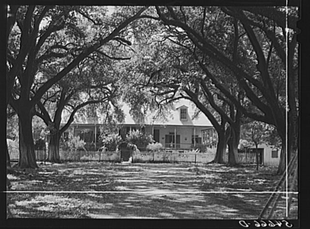 Melrose, Natchitoches Parish, Louisiana. Old plantation home in cotton region, La Cote Joyeuse Bermuda, belonging to Prudhomme family