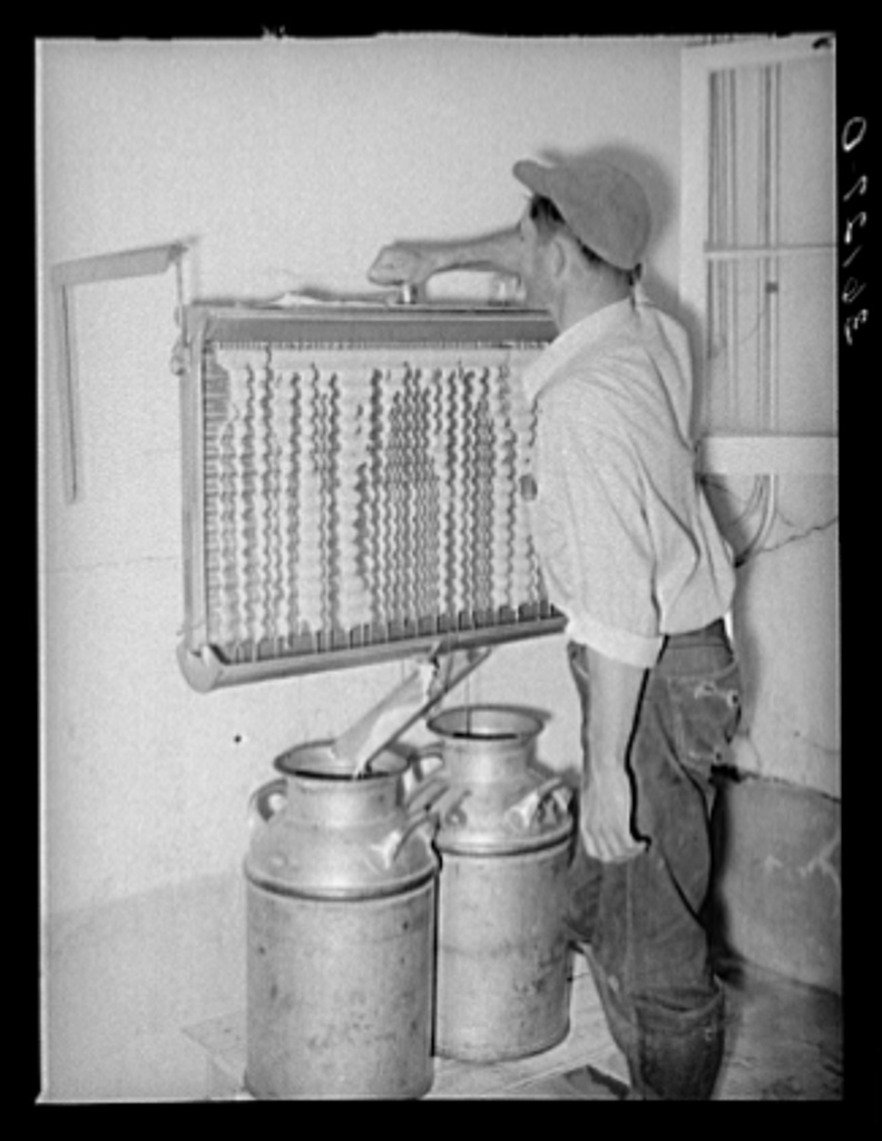 Member of the Arizona part-time farms, Chandler Unit, cooling milk at the dairy of the farm. Maricopa County, Arizona