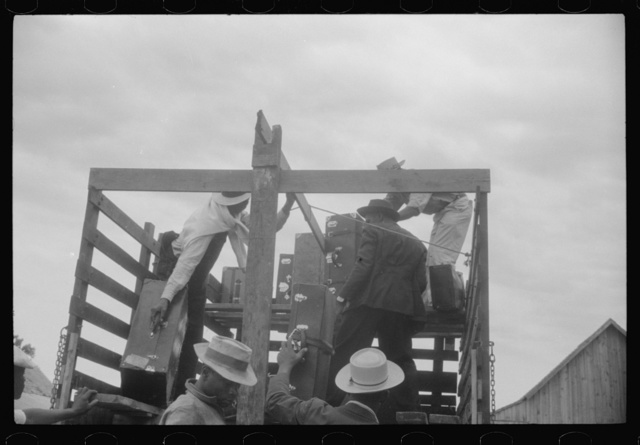 Migrants getting luggage aboard the truck which will take them from Belcross, North Carolina to another job at Onley, Virginia