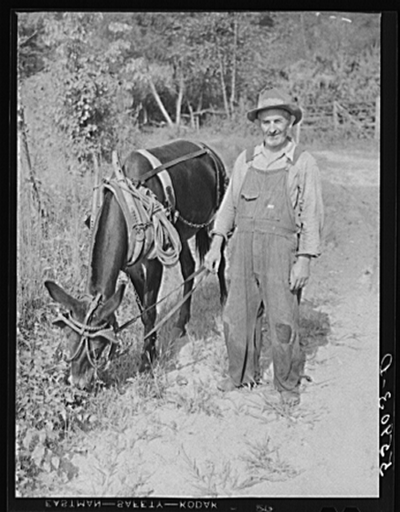 Mountaineer with his mule which is not only the best animal for hard work on hillsides but also better for travel over rought, rocky roads and creek beds. Up Berton's Fork, off Middle Fork of Kentucky River. Breathitt County, Kentucky