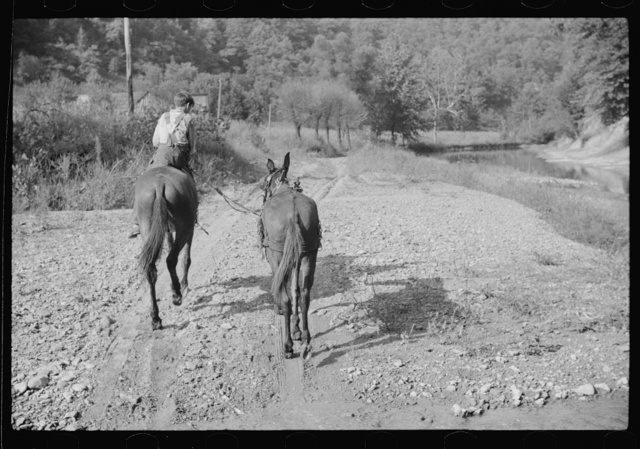 Mountaineer's son leading home a mule down the creek bed in the evening. Breathitt County, Kentucky
