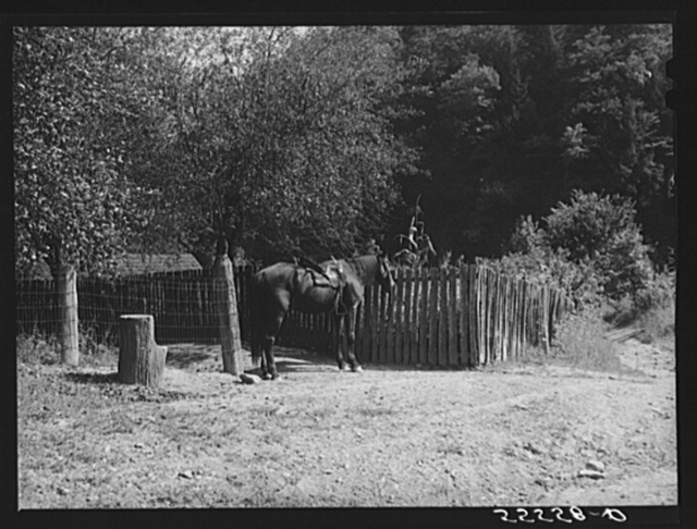 Mounting block and horse by mountain family home. Up Burton's Fork, Kentucky River near Jackson, Kentucky
