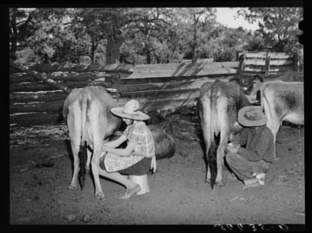 Mr. and Mrs. Caudill milking. They have six cows, two calves, and have milk for their own use and sell cream to the creamer at Magdalena