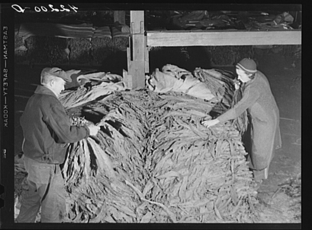 Mr. and Mrs. Oliver Barber stripping tobacco in their barn. Windsorville Connecticut