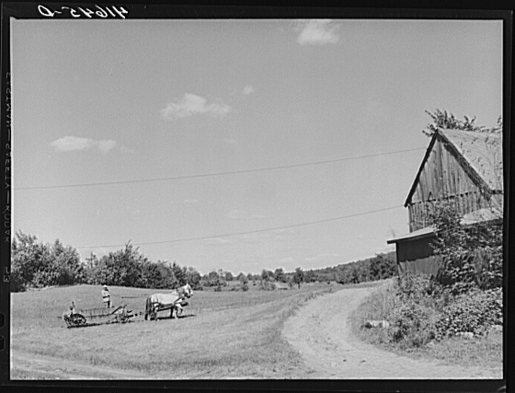 Mr. Arthur Wolf driving his team of horses on his farm in North Branford, Connecticut