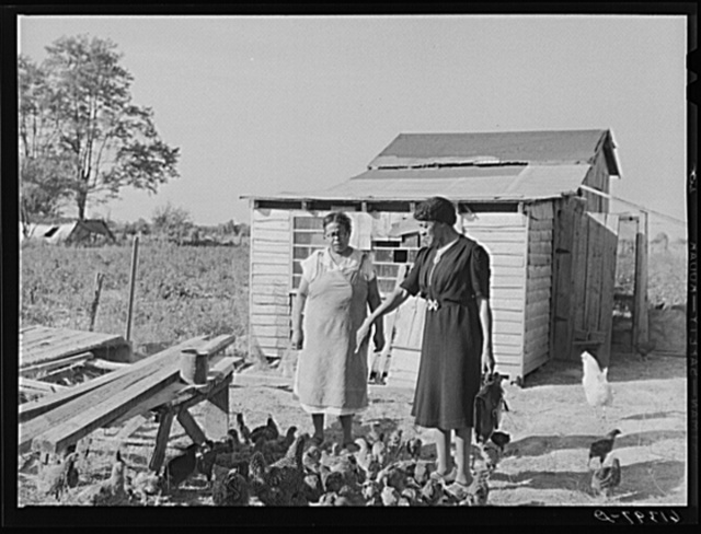 Mrs. Eugene Smith, wife of FSA (Farm Security Administration) borrower, in the chicken yard with Margarite Chappelle, home supervisor. Saint Mary's County, Maryland