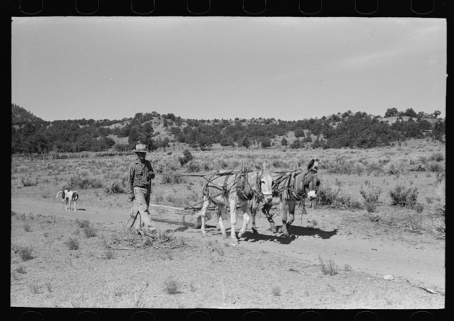 Neighbor who is helping build dugout dragging up log, Pie Town, New Mexico