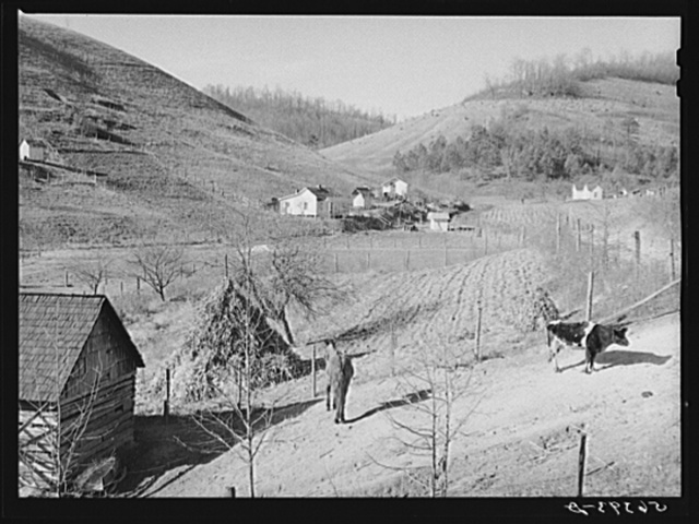 Noah Garland's barn and livestock with his son's home in the distance. Southern Appalachian Project near Barbourville, Knox County, Kentucky