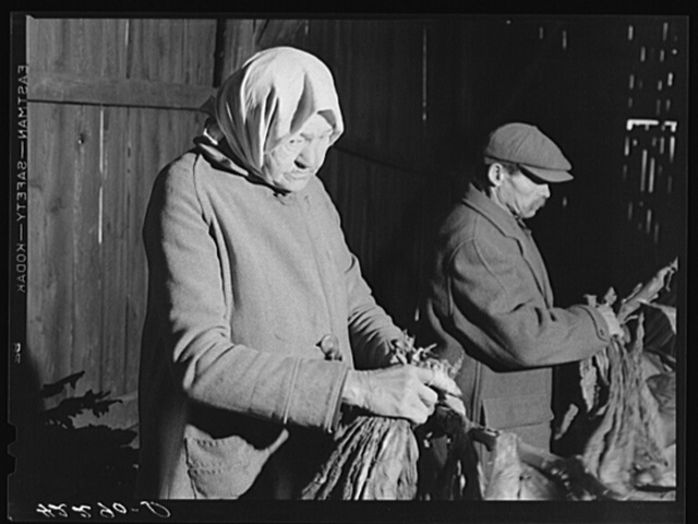 Old Polish woman hired to strip tobacco on the farm of William and Martin O'Donnell. Windsorville, Connecticut
