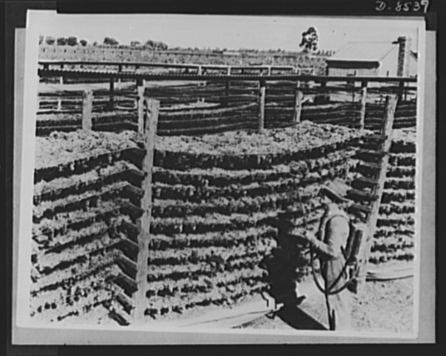 One year of reciprocal aid. Australia has undertaken to expand the production and processing of her food, to supply the American armed forces in the Solomons, New Guinea, New Caledonia and the New Hebrides, in addition to those on the Australian mainland. Dried fruit is shown here, before being shipped to the fighting men