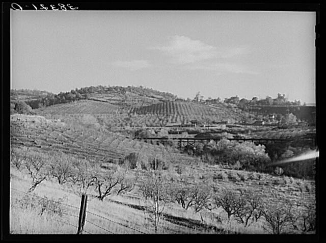 Orchards in the hills near Auburn, California