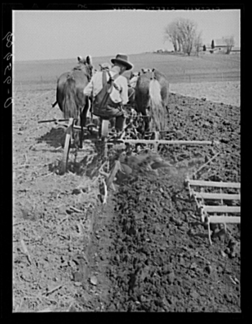 Plowing and harrowing with team of horses. Grundy County, Iowa. Use of horses for this operation is rare in Grundy County