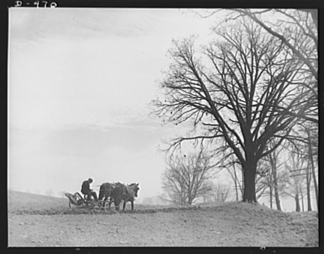 Productive America. Ploughman in the spring--a scene reminiscent of a Corot painting. This truck farm near Cleveland, Ohio is typical of many that supply food to neighboring cities