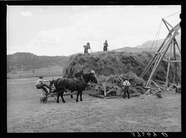 Pushing load of hay onto hay stacker. Ouray County, Colorado