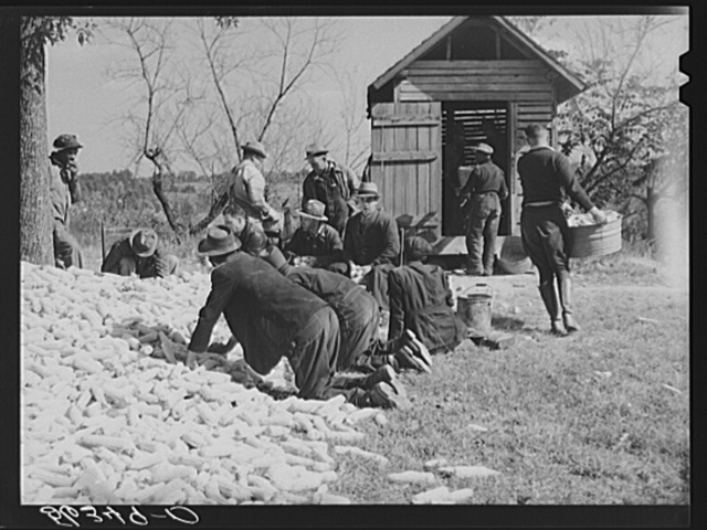 Putting the corn in the crib to store for winter feed after shucking on Hooper Farm near Hightowers and Prospect Hill. Caswell County, North Carolina