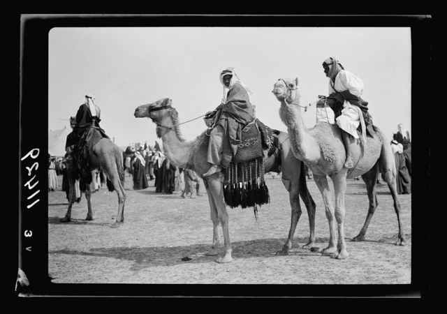 Race meeting (horse & camel). Beersheba. Camels paraded befo[re] the race